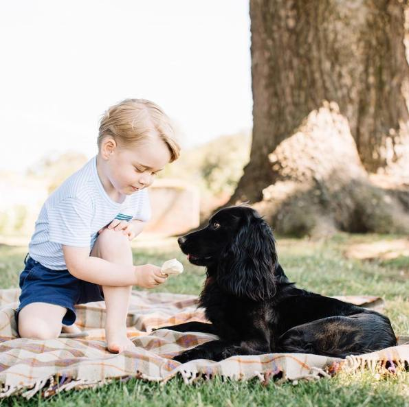 Here is a photo of #PrinceGeorge feeding an ice cream cone to the royal family's dog, Lupo, because why not, it's Friday, and it is the young royal's third birthday. 👑 🎂 (📷: Matt Porteous/Kensington Palace)